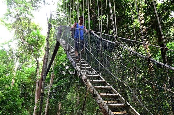 Taman Negara Tree Top Walk