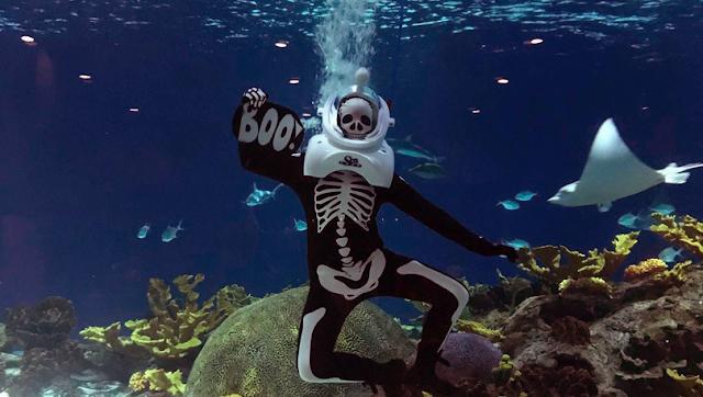 OdySea Aquarium Halloween Costume underwater