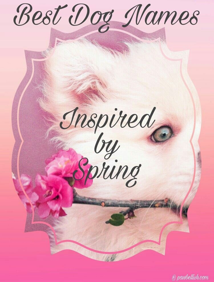 White dog holding a sprig of spring flowers, spring inspires beauty and dog names.
