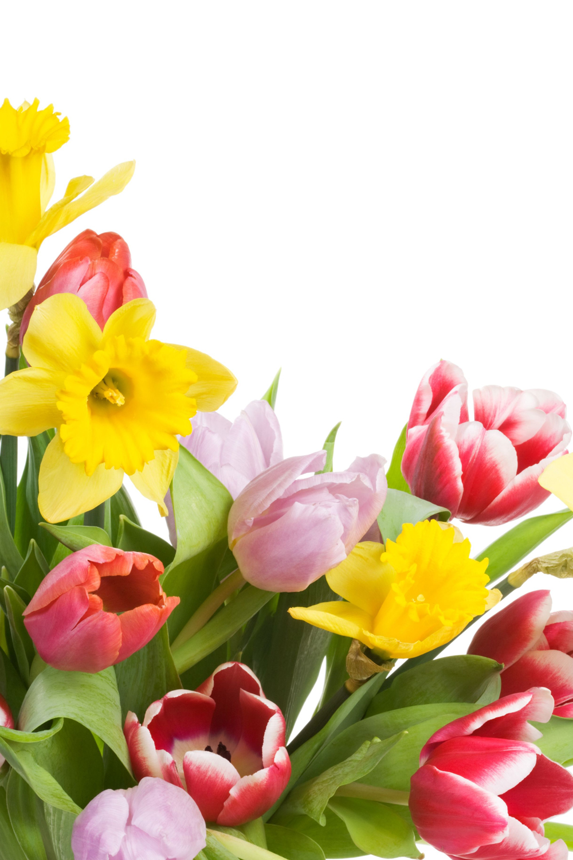 Im gene experience 10 fotos de ramos de flores para - Fotos de rosas de colores ...
