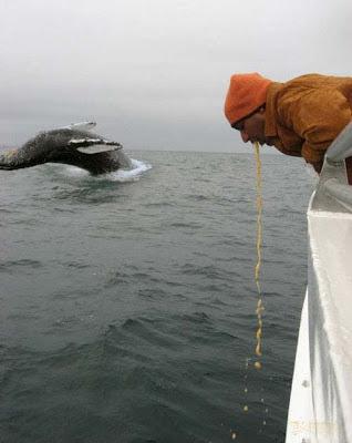 Wal im Meer Mann kotzt lustige Bilder
