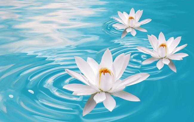 flor-de-loto-prosperidad