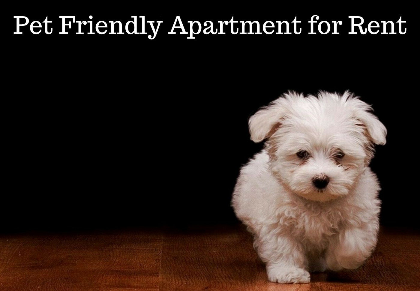 Room Rental Services in Toronto | CIRCL: Pet Friendly ...