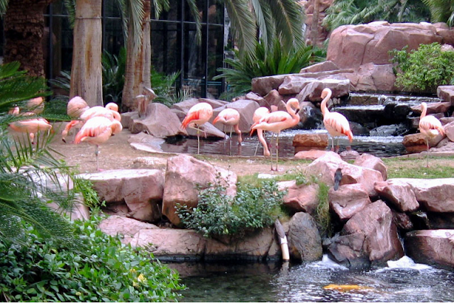 Wildlife-Habitat-Hotel-Flamingo