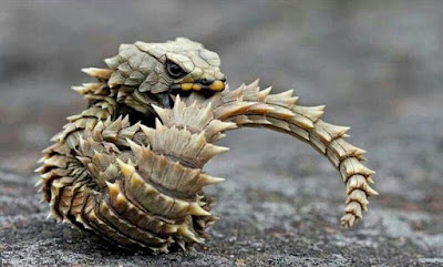 Os animais mais bizarros no mundo