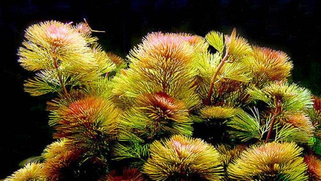 Kỹ thuật trồng và chăm sóc cây thuỷ sinh