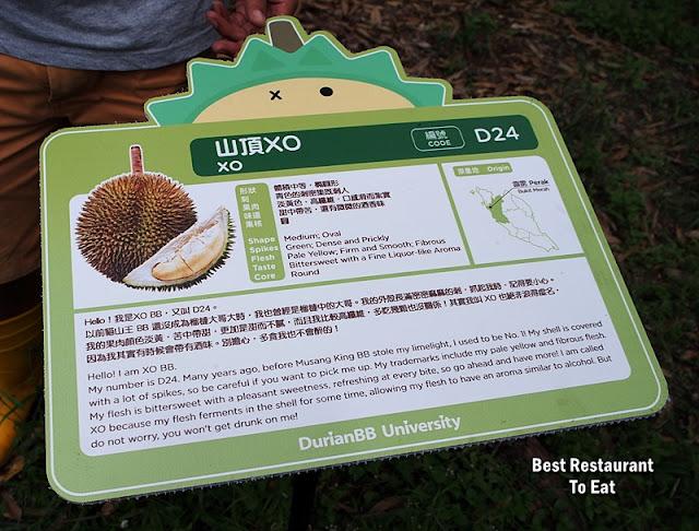 D24 Durian - Raub Pahang