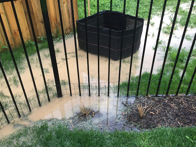 flooded backyard with black fence