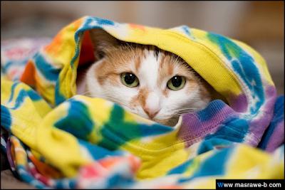 صور صور قطط كيوت 2020 خلفيات قطط جميلة جدا cats32.png