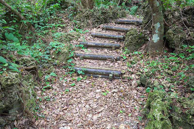 logs, steps, trail, forest, Okinawa