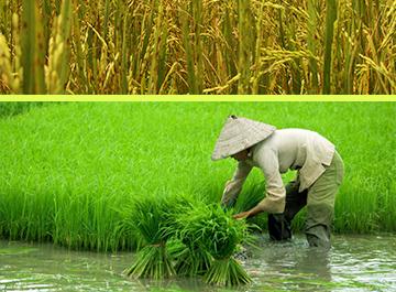 Pengertian Pertanian Organik Menurut Para Ahli Sistem Pertanian