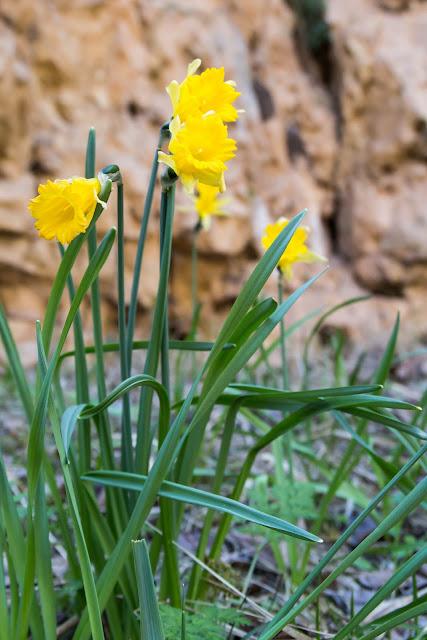 primavera9