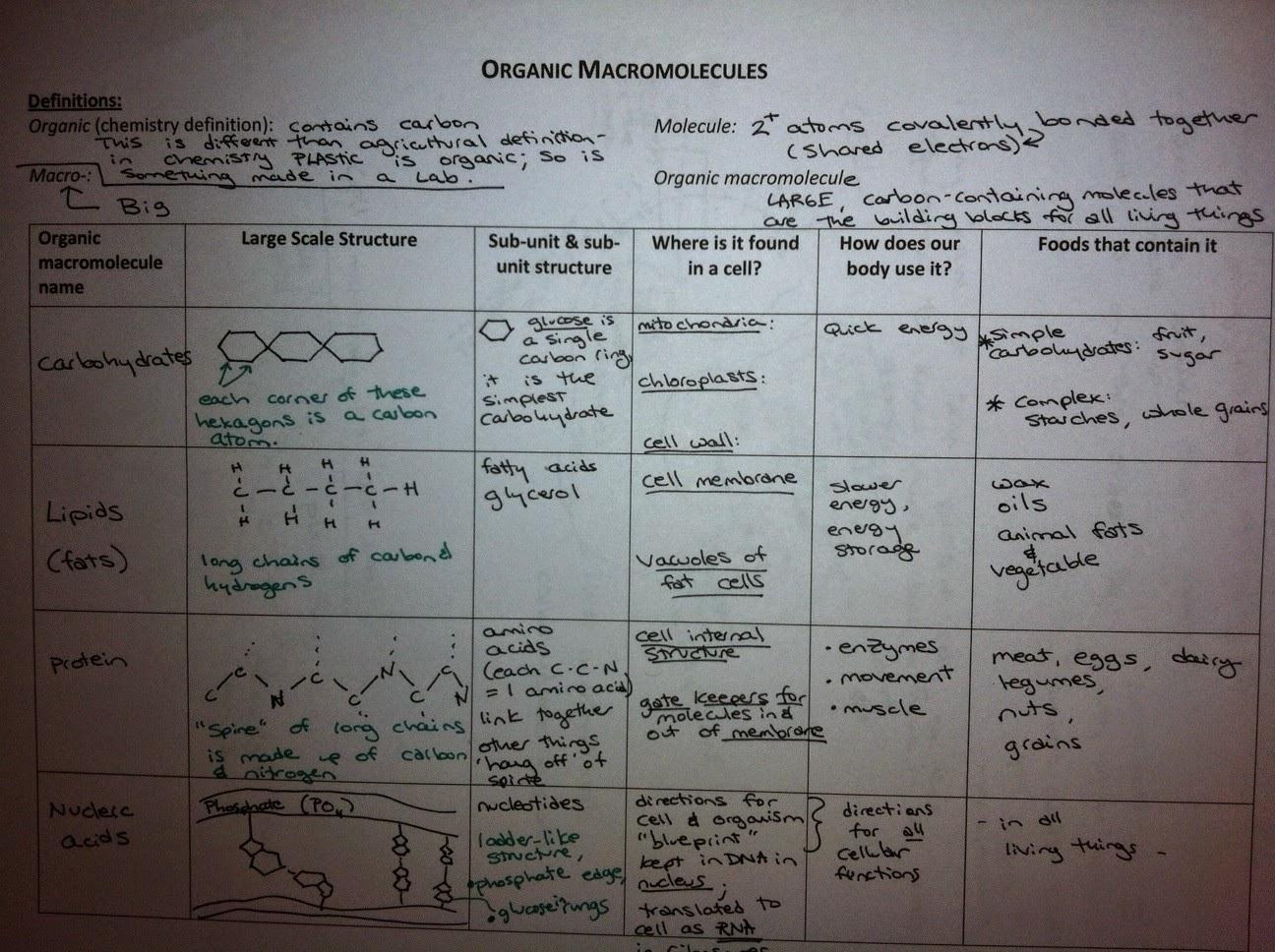 Biology Chinook Academy Kemper Macromolecules Notes