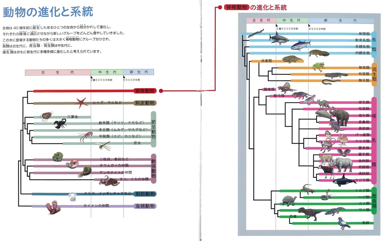 楽天ブックス: 霊長類ヒト科動物図鑑 - 向田 邦子 - …
