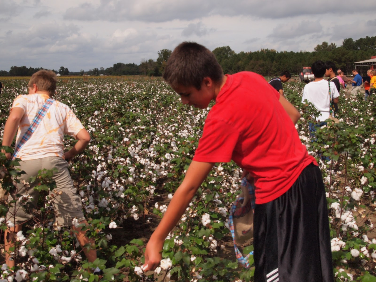 81 School Cancels Black History Cotton Picking Field Trip Students