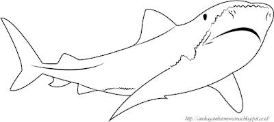 Gambar Mewarnai Ikan Hiu 3