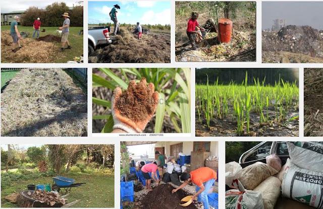Sugarcane fibre waste compost