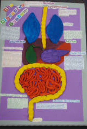 Arts & Crafts, English and Science Blog: Science Project Unit 3. 2nd ...