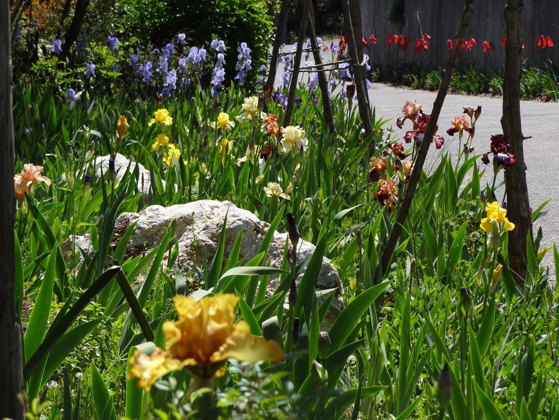avril, jardin fébrile - Page 7 DSC07141
