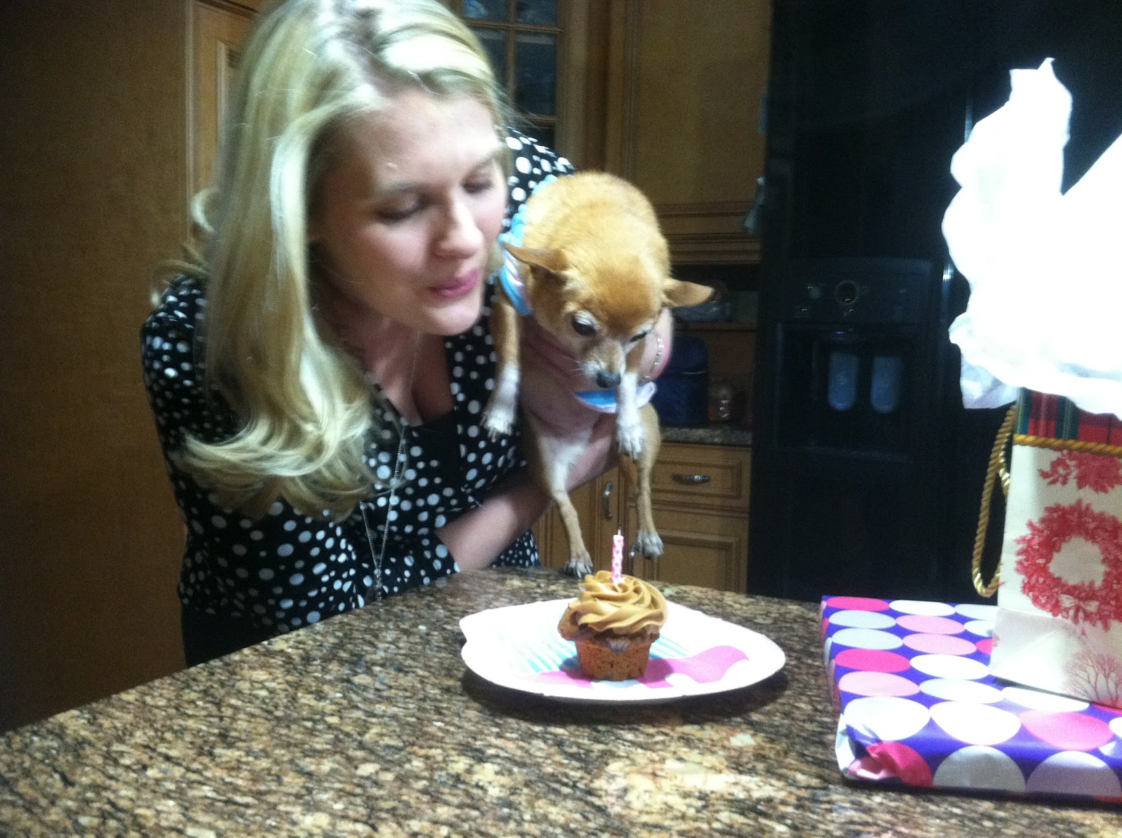 Kyla S Cupcakes Pupcakes The Cupcakes For Dogs