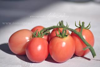 http://tomatprat.blogspot.no/2013/07/pink-thai-egg-thaienes-favoritt-tomat.html