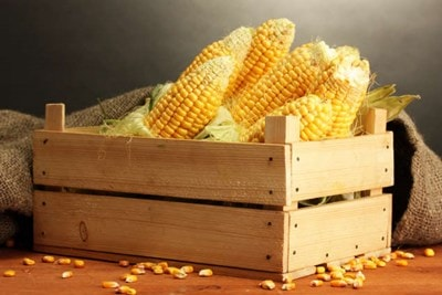 Daftar Sayuran untuk Penderita Asam Urat Tinggi