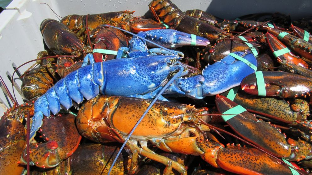 Supplier Fresh Water Lobster, Wholesale Lobster Meat, Lobster Facts