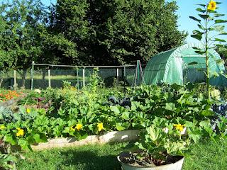ecolo bio nature permaculture urbaine et jardinage bio comment jardiner dans un potager en. Black Bedroom Furniture Sets. Home Design Ideas