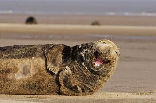 Tiernas Imágenes de Animales Sonriendo 9