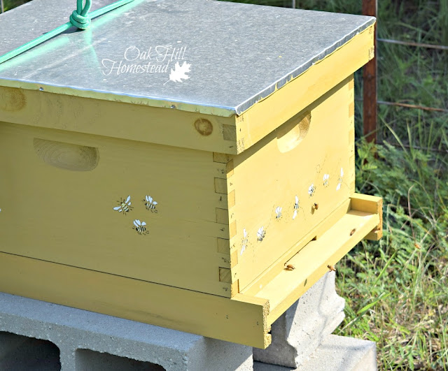 My hive with a single brood box.