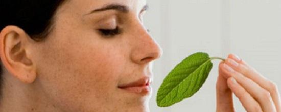 plantas medicinales expectorantes y mucoliticas