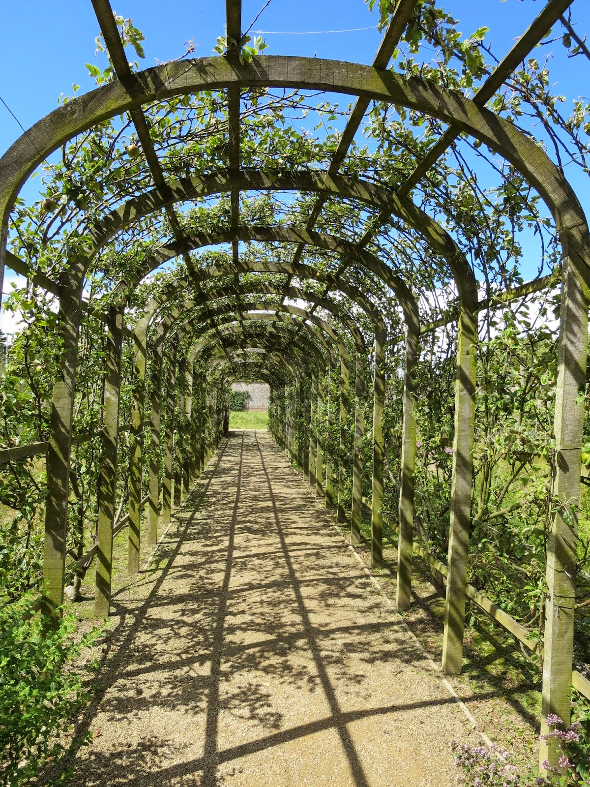 Trellis supporting apple and pear plants in the walled garden in Marlay Park