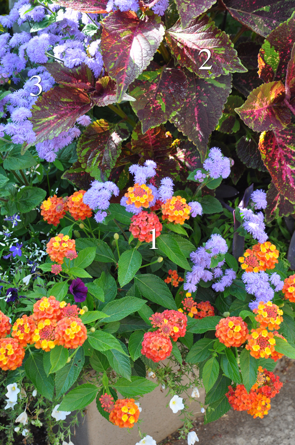 Three Dogs in a Garden: The Summer\'s Prettiest Container Plantings