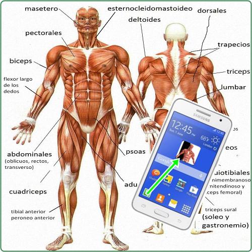 Partes del cuerpo Humano-APLICACIÓN ANDROID. | Matemática Serie 23