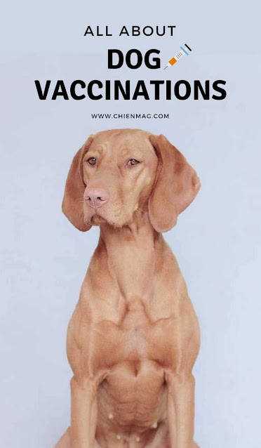 All About Dog Vaccinations