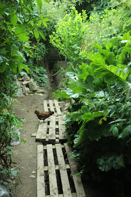 Hens as opportunists in an organic forest garden