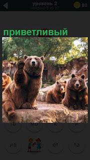 медведь в приветствии поднимает свою лапу