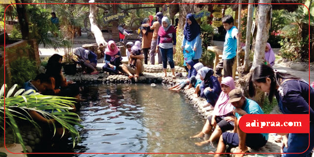 Terapi Ikan di Kampung Flory | adipraa.com