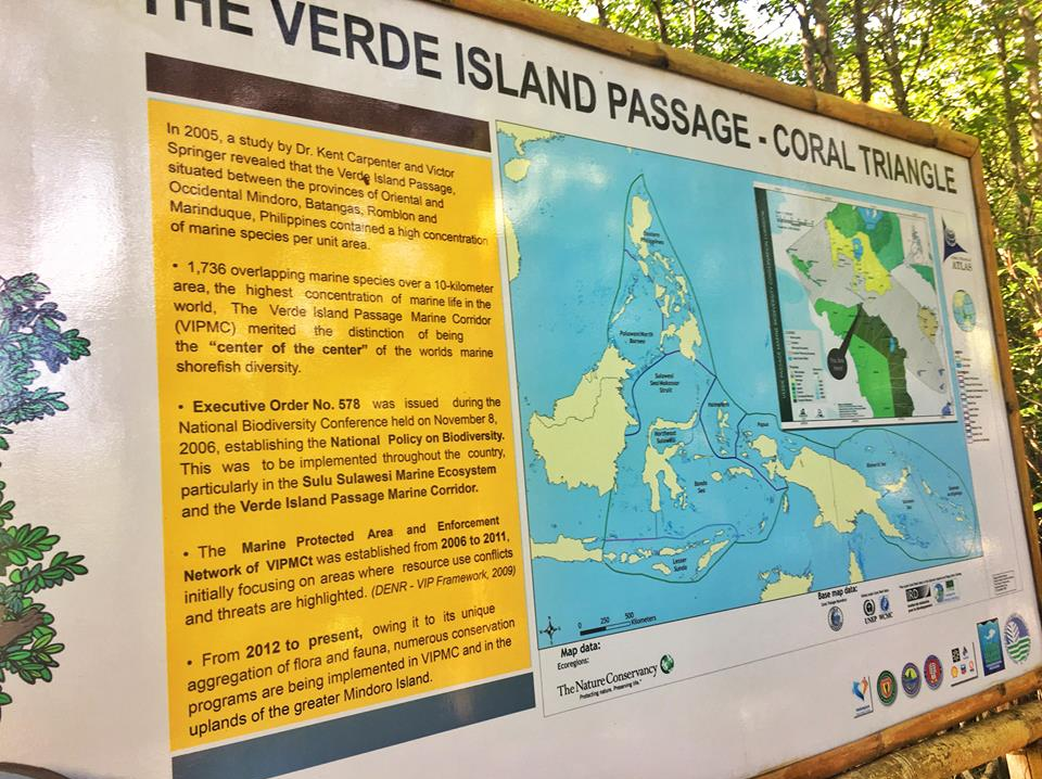 puerto galera mangrove site travel guide