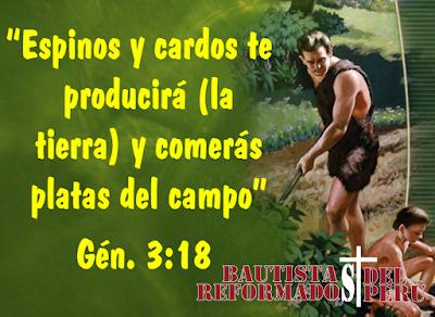 Espinos y cardos (Génesis 3:18) - Charles Spurgeon