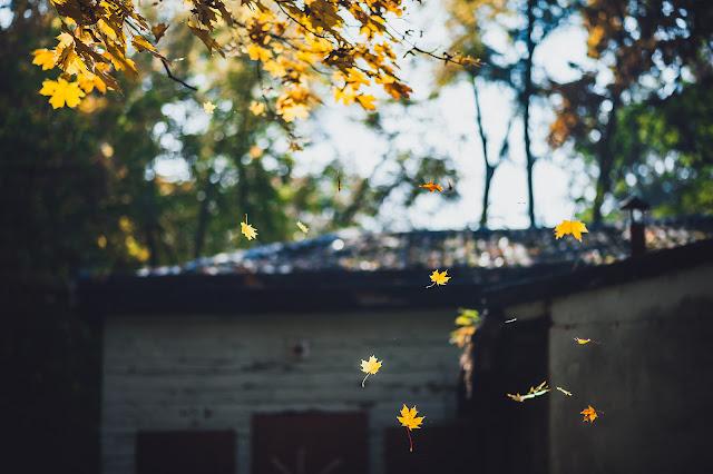 Thơ tình cuối mùa thu - Những bài thơ tình cuối mùa thu lãng mạn