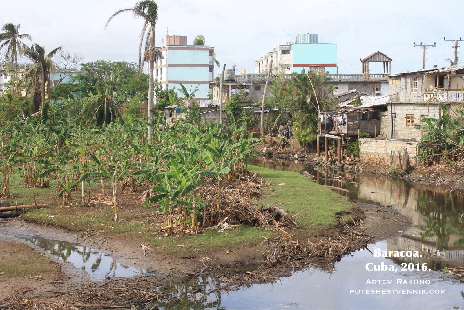 Пальмы на окраине кубинского города
