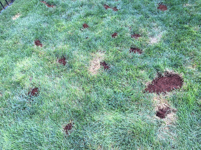 yard with brown patches