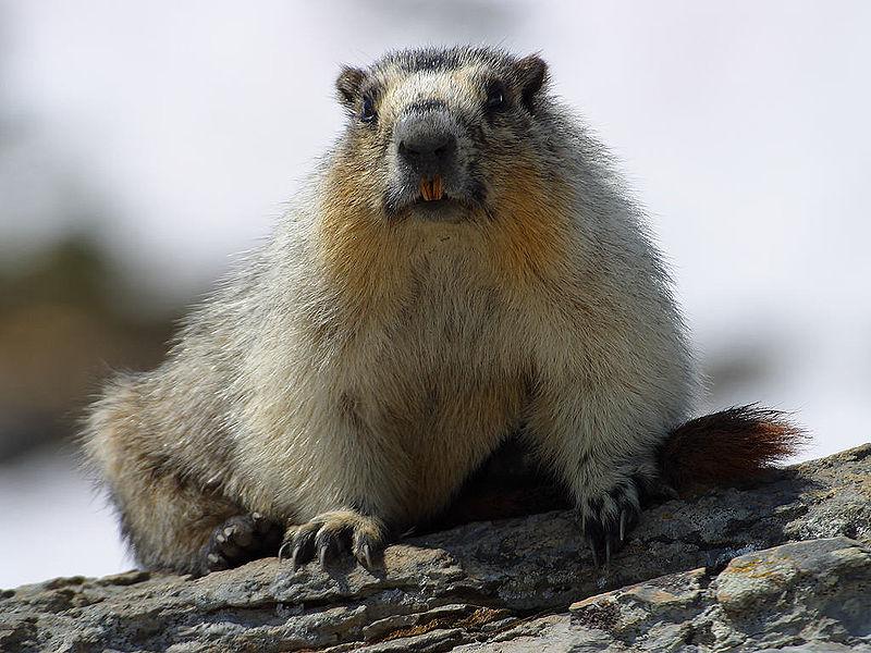 Kopi Hangat Kumpulan Foto Binatang Menyusui  Mamalia