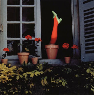Guy Bourdin photo of a woman's leg in red rights growing out of a plant pot