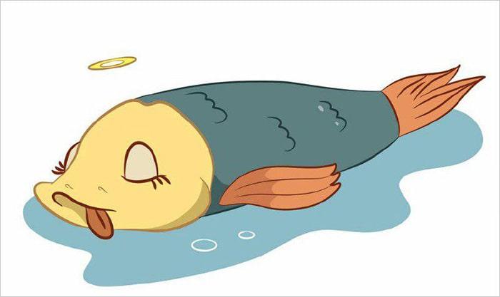 Новости от Веселые рыбаки