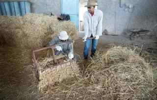 Entenda a reforma: Como fica a aposentadoria rural?
