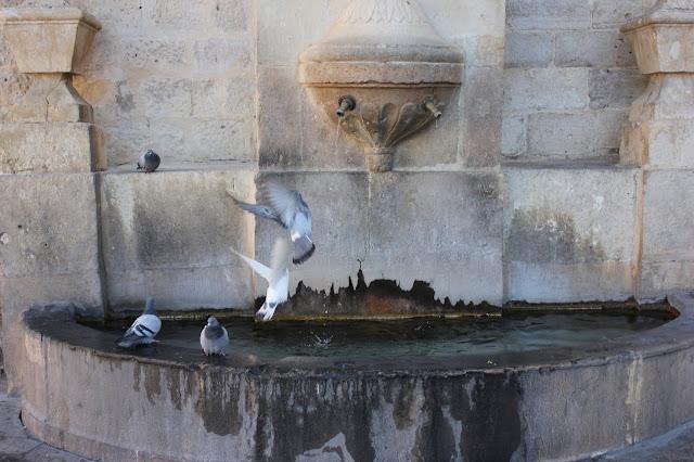 Fuente y paloma.