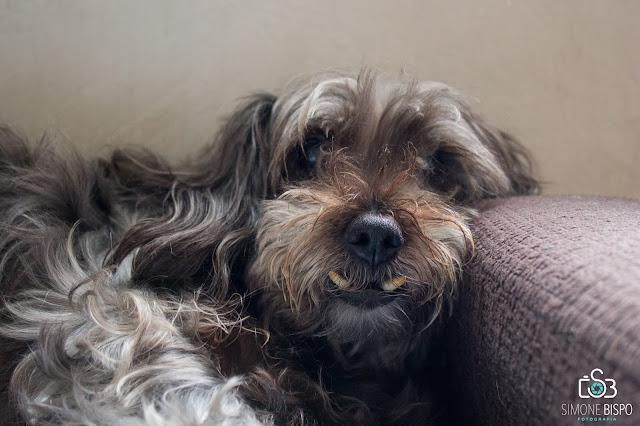 Minha experiência como anfitriã na Dog Hero