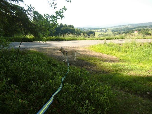 Mina Urlaub Hund Bayerischer Wald Sommer